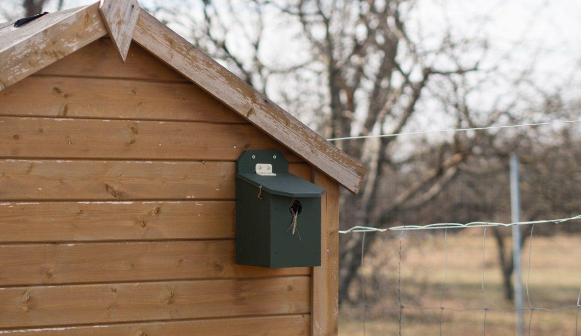 Vögel Wespen Gartenhütte