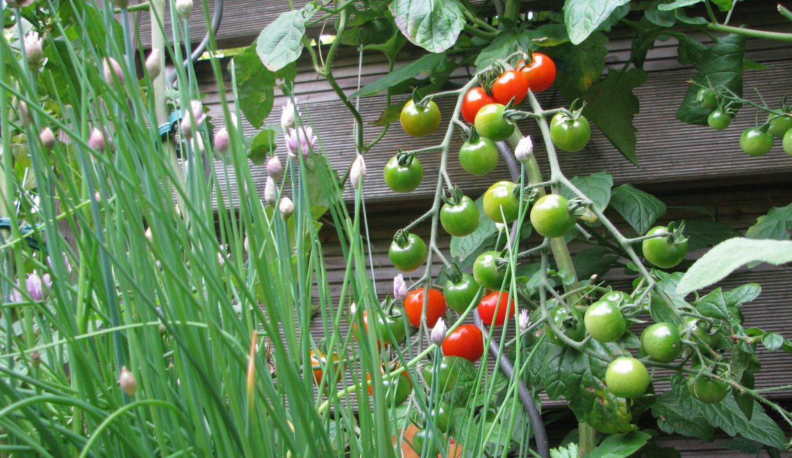 Gute Nachbarn im Gemüsebeet