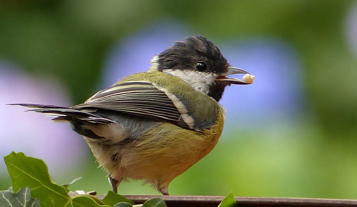 Warum ich Wildvögel das ganze Jahr über füttere