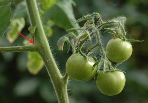 Gemüsebeet Schrebergarten Permakultur