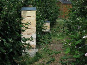 Selbstversorger Permakultur Honig Beute Schrebergarten