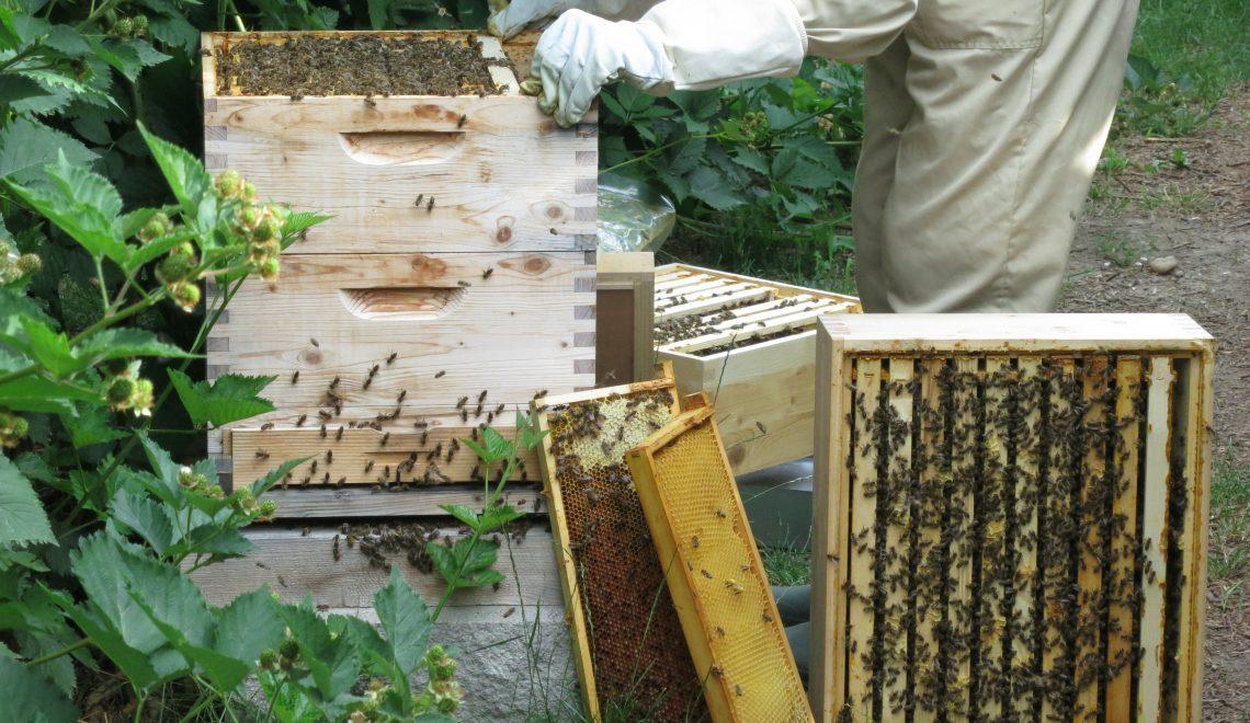 Bienen Bienenstock Imker
