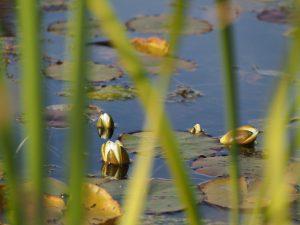 Gräser Wasserpflanzen abschneiden Schwimmteich
