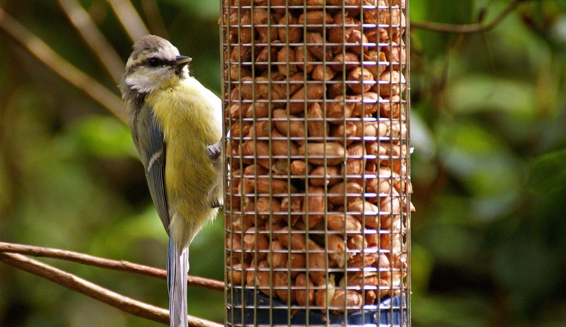 Vögel füttern Winter Stadt Balkon
