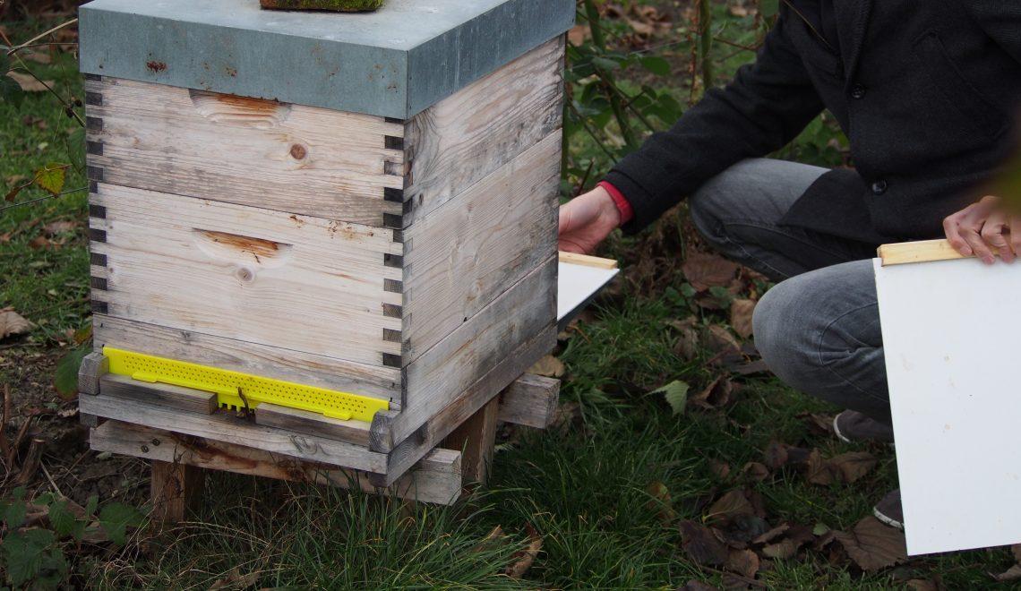 Bienenstock Garten Honig Winter