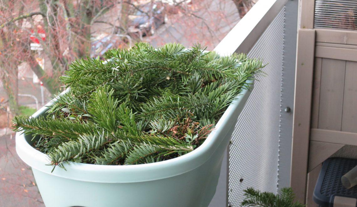 Winterschutz aus alten Christbäumen