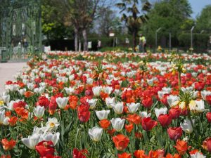 Wien Donaustadt Quadenstraße Kleingarten Messe Tulpen Blumenzwiebeln Glashaus