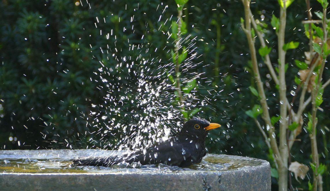 Vogeltränke Wasser Sommer Wildvögel Amsel Garten Balkon Terrasse trinken baden