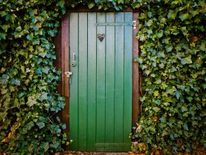 Hedera helix Kletterpflanze Fassadenbegrünung Fassadengrün Schlingpflanze Wand Mauer Schatten Rankgerüst Spalier Gitter