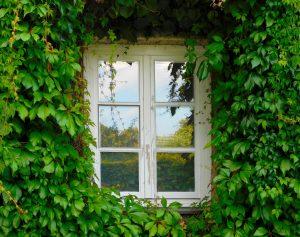 Vitis Kletterpflanze Fassadenbegrünung Fassadengrün Schlingpflanze Wand Mauer Schatten Rankgerüst Spalier Gitter