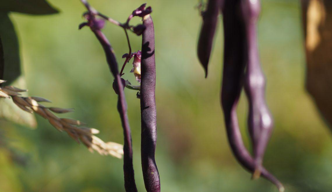Der Gemüsegarten im Herbst
