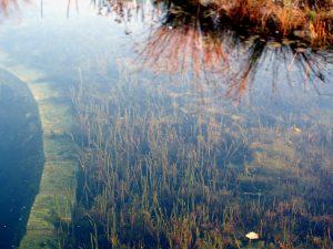 Garten Wasser Pflanzen schneiden Schnitt Herbst Winter baden Algen