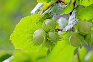 Hecke Böschung Garten Früchte