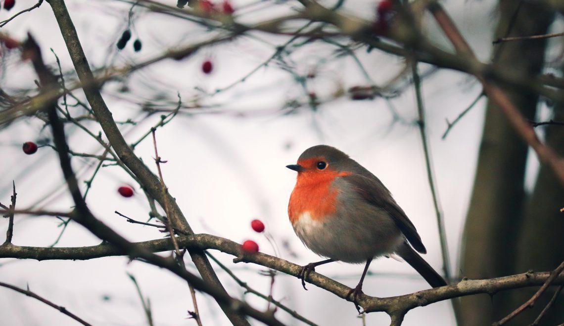 Wildvögel füttern: Wer frisst was?