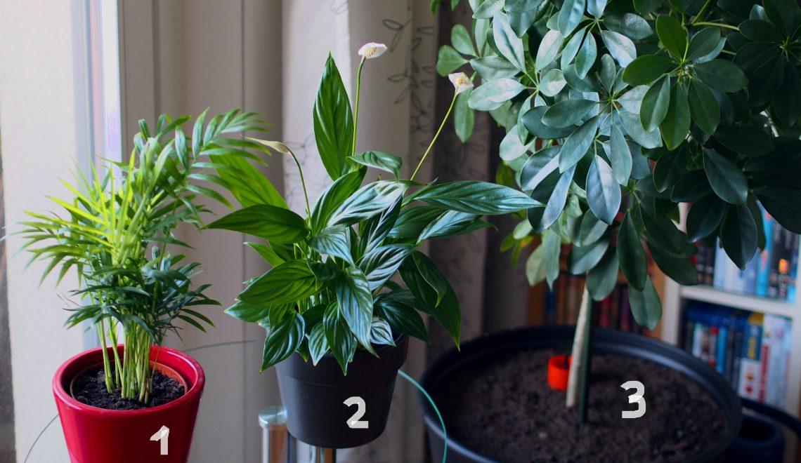 Zimmerpflanzen für dunklere Ecken