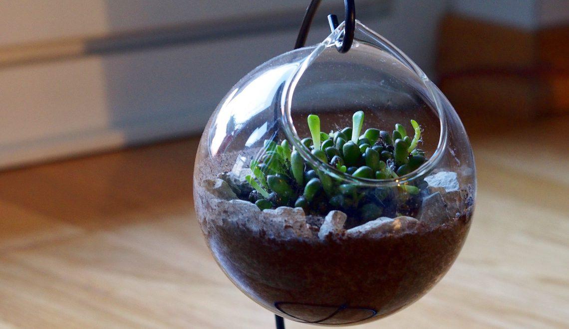 Mini-Garten im Glas