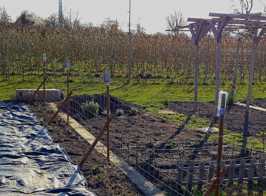 Gitterzaun Pflanzen Gemüsegarten Zuckererbsen Stangenbohnen Kapuzinerkresse selber machen Pfahl Pfosten Tomaten