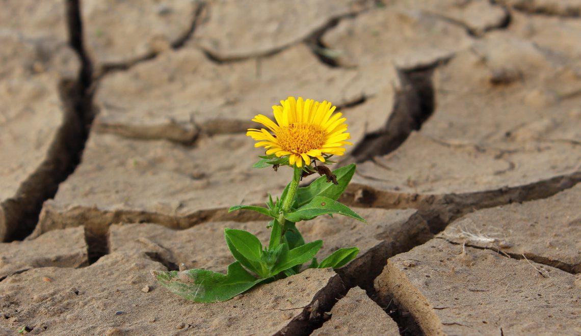 Der Garten und der Klimawandel