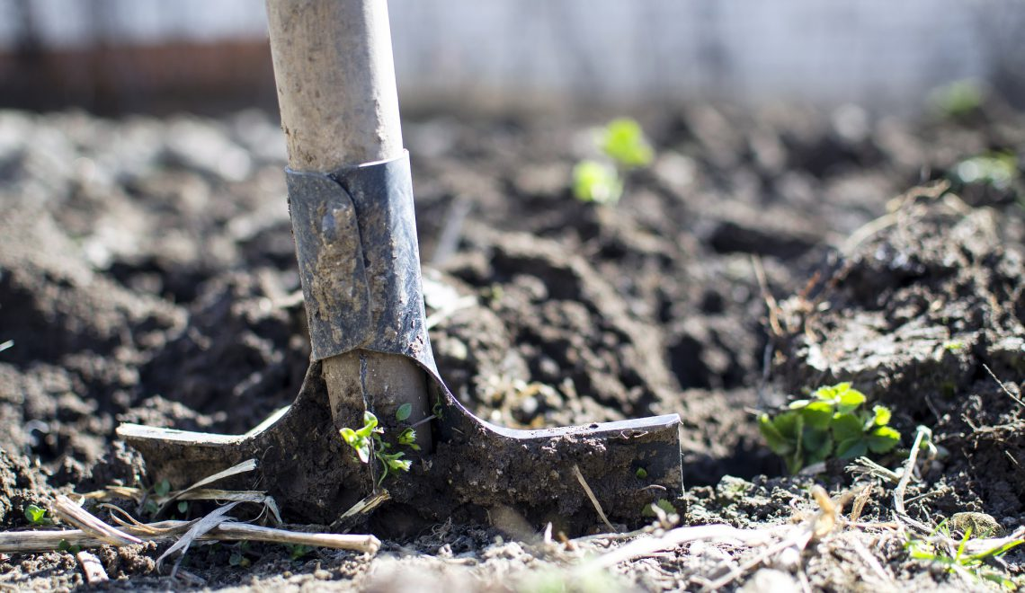 Welches Gemüse kann man im August anbauen?