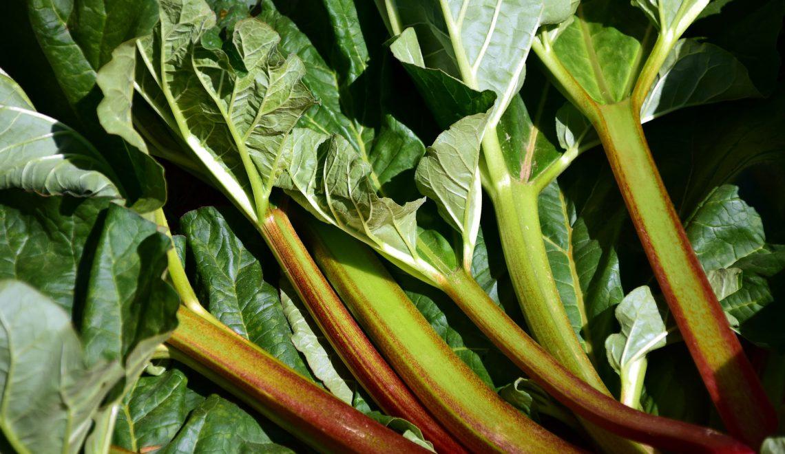 Marmelade Konfitüre Gelee einkochen einmachen Gemüsebeet Garten