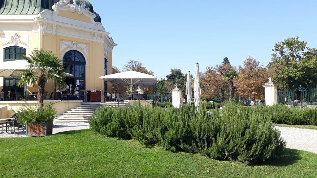 Rosmarin Hecke immergrün Tiergarten Schönbrunn Wien Kräuterbeet Garten Heilpflanze Küche Gewürz
