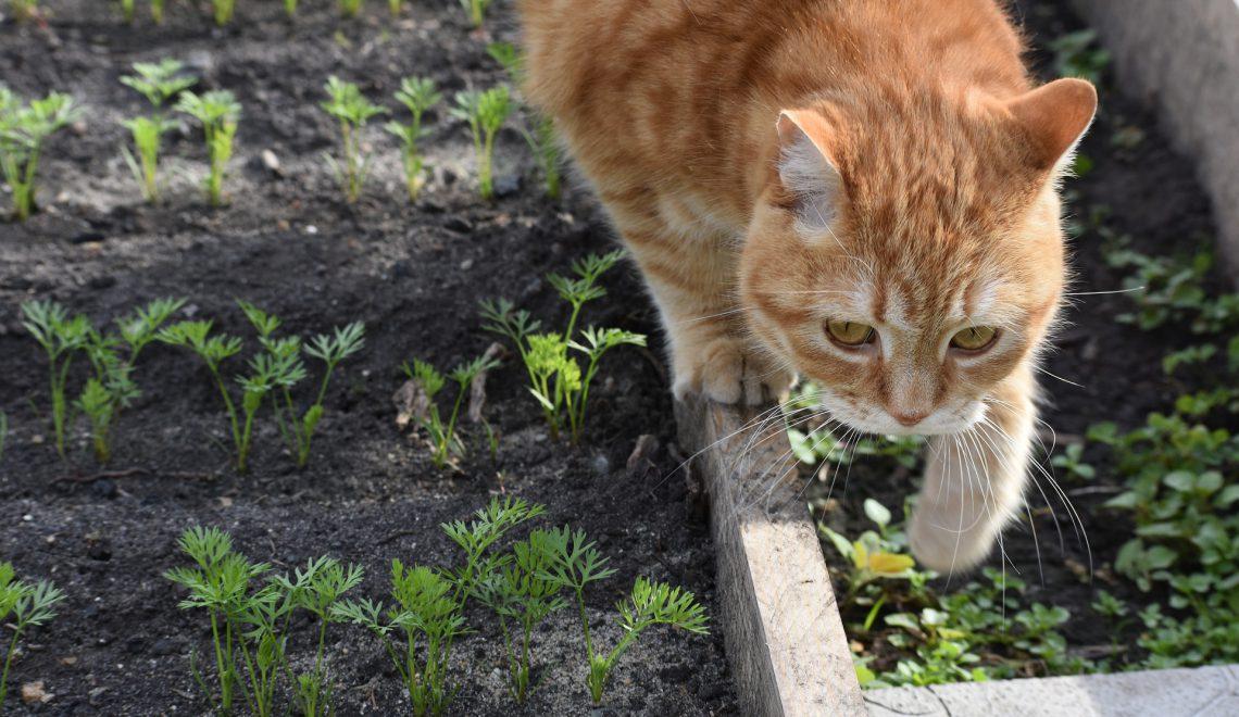 Welches Gemüse kann man im Februar anbauen?