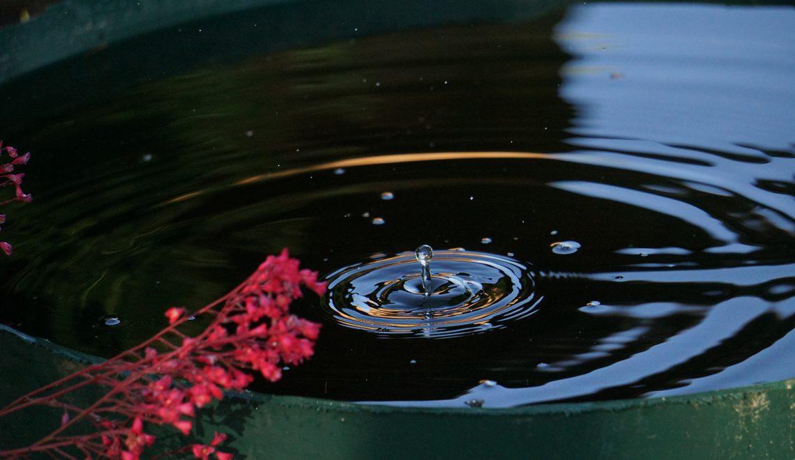 Regenwasser sammeln im Garten